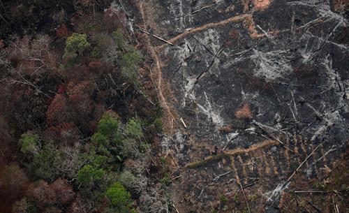 区块链能帮助巴西减少森林砍伐带来的影响